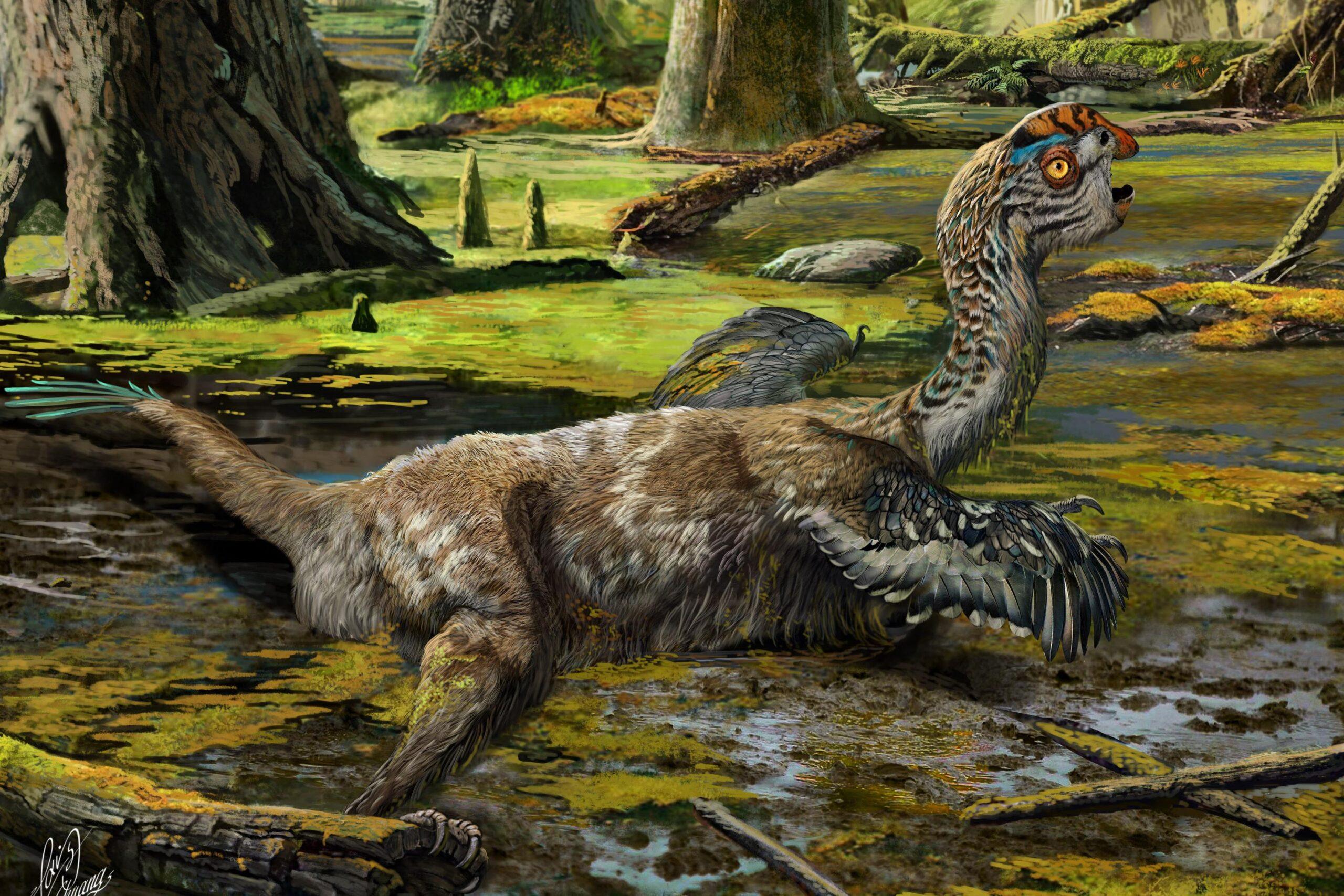 Oviraptorosaur Discovery in Mongolia!