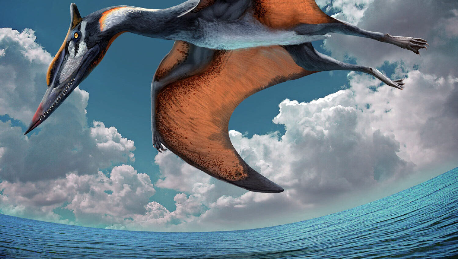 Pterosaur Discovery In China!
